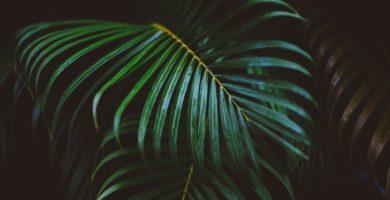plantas pendentes que gostam de sol
